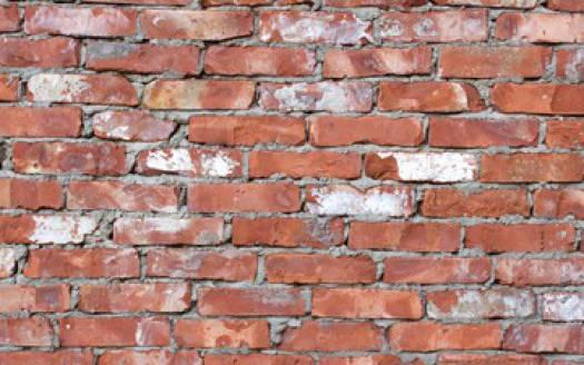 gribok na stene