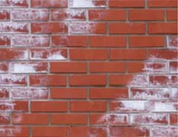 Профилактика грибка: как избежать появления на стенах и потолке картинки